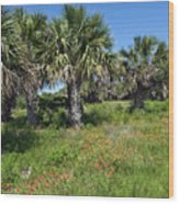 Pelican Island In Florida Wood Print
