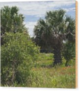 Pelican Island Nwr In Florida Wood Print