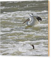 Pelican Landing And Cormorants Wood Print