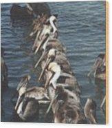 Pelican Line Wood Print