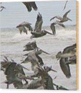 Pelican Migration  Wood Print