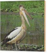 Pelican Mudmasks Wood Print