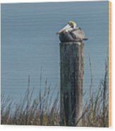 Pelican On A Piling Wood Print