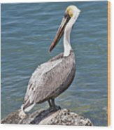 Pelican On Rock Wood Print