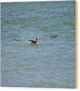 Pelican On The Move Wood Print