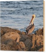 Pelican On The Rocks Wood Print