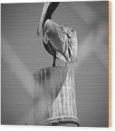 Pelican Perched Wood Print