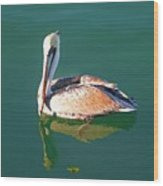 Pelican Reflection Wood Print