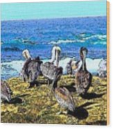 Pelican Rock Wood Print