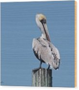 Pelican Side Pose Wood Print