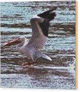 Pelican Skimming The Rock River Wood Print