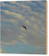 Pelican Soaring At Sunset Wood Print