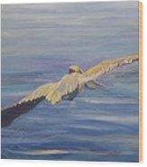 Pelican Soaring Wood Print