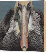 Pelican Stare Wood Print