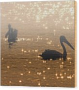 Pelican Sunrise Wood Print