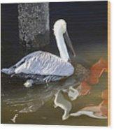 Pelican Swim Wood Print