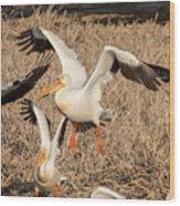 Pelican Takeoff Wood Print