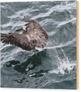 Pelican Takes Off Wood Print