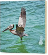 Pelican Taking Flight Wood Print