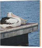 Pelican Taking Time Out 691 Wood Print