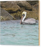 Pelican Trolling Wood Print