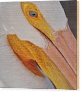 Pelican Twist Wood Print