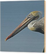 Pelican Upclose Wood Print