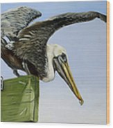 Pelican Wings Wood Print