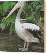 Pelican With A Bird Park In Bali Wood Print