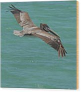 Pelican With His Wings Extended Over The Tropical Aruban Waters Wood Print