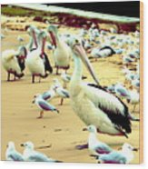 Pelicans At Pearl Beach 4.1 Wood Print