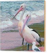 Pelicans At Pearl Beach 5.1 Wood Print