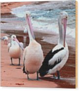 Pelicans At Pearl Beach 5.2 Wood Print