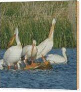 Pelicans Being Pelicans Wood Print