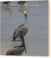 Pelicans Enjoying The Day At Playa Manzanillo Wood Print