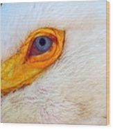 Pelican's Eye Wood Print
