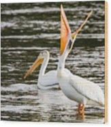 Pelicans Fishing Wood Print