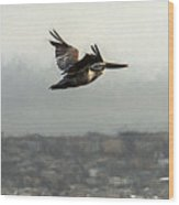 Pelicans Flying Over San Francisco Bay Wood Print