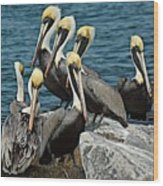 Pelicans Fort Pierce, Fl. Jetty Wood Print