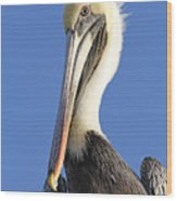 Pelican's Good Side Wood Print