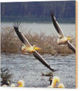 Pelicans In Flight Wood Print