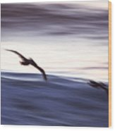 Pelicans Ocean Flight In La Jolla Wood Print