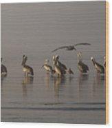 Pelicans On Beach Wood Print