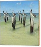 Pelicans On Pier Pilings Wood Print