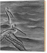 Pelicans On The Chesapeake Wood Print
