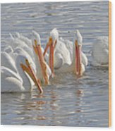 Pelicans On The Prowl Wood Print