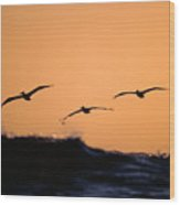 Pelicans Over The Pacific Wood Print