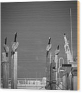 Pelicans Perched By Sailboat Wood Print