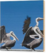 Pelicans Take Flight Wood Print