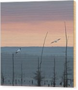 Pelicans Welcome The Day Wood Print